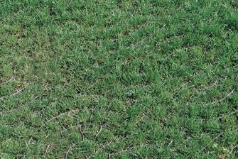 grass-driveway-surface
