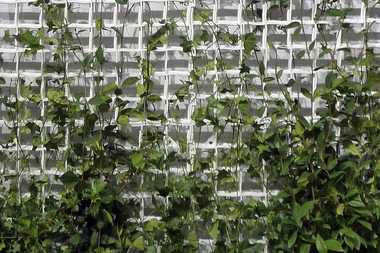 verde-verticale-rampicante