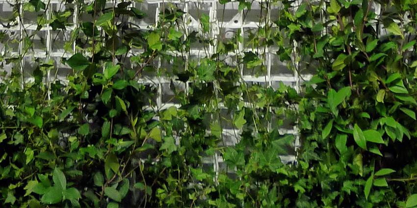 vertical-green